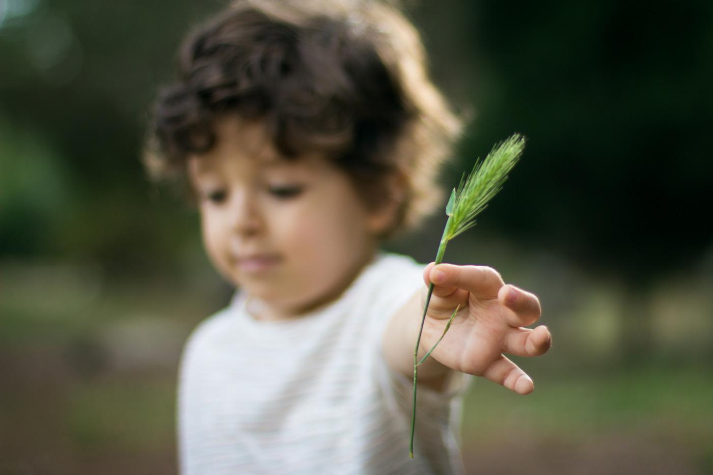 niño sujetando un hilo de trigo con poca profundidad de campo