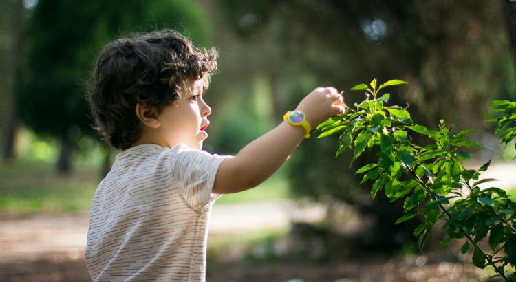 niño cogiendo una hoja de un arbol en el bosque urbano