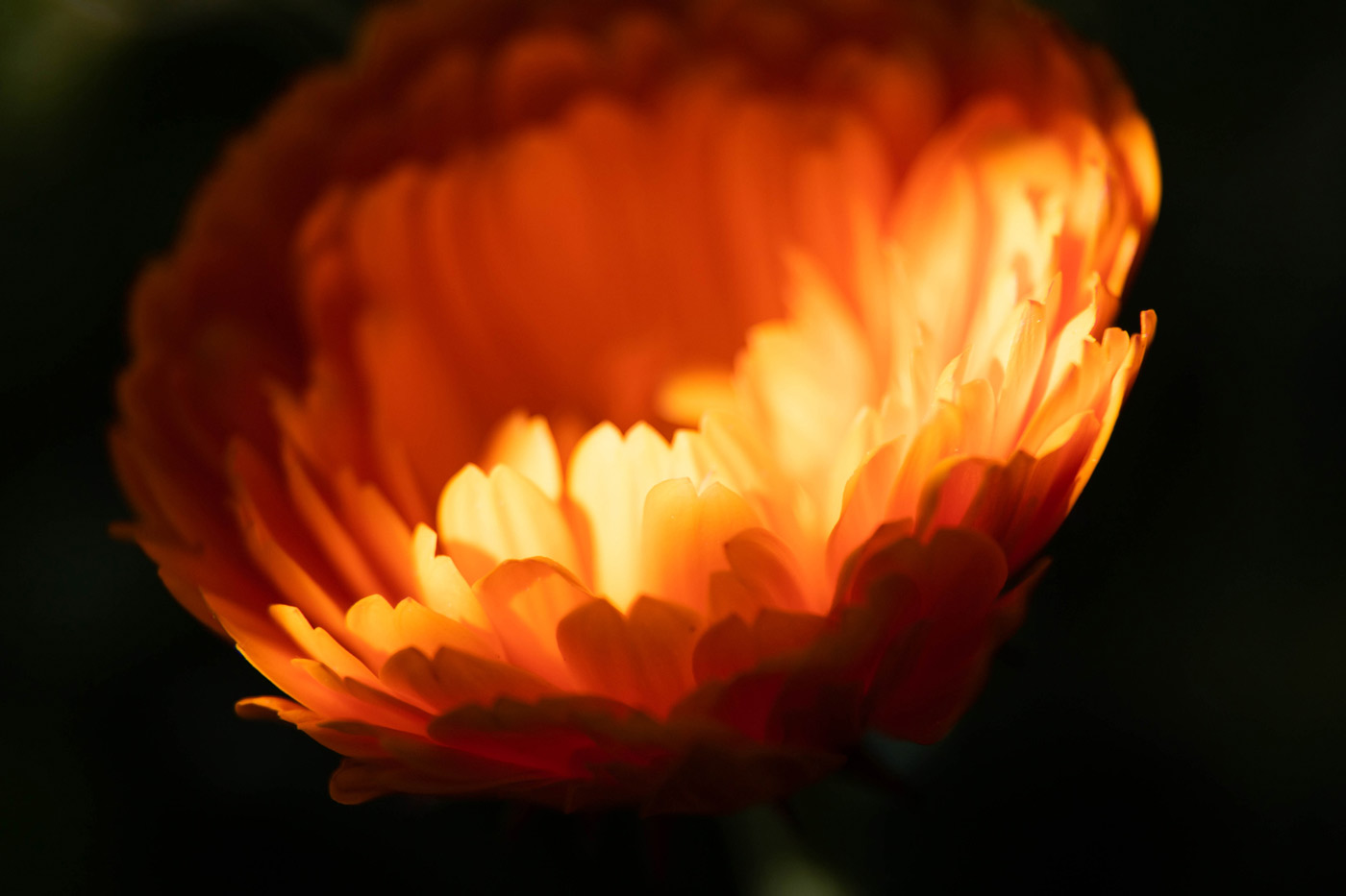 flor color naranja bañada por el sol